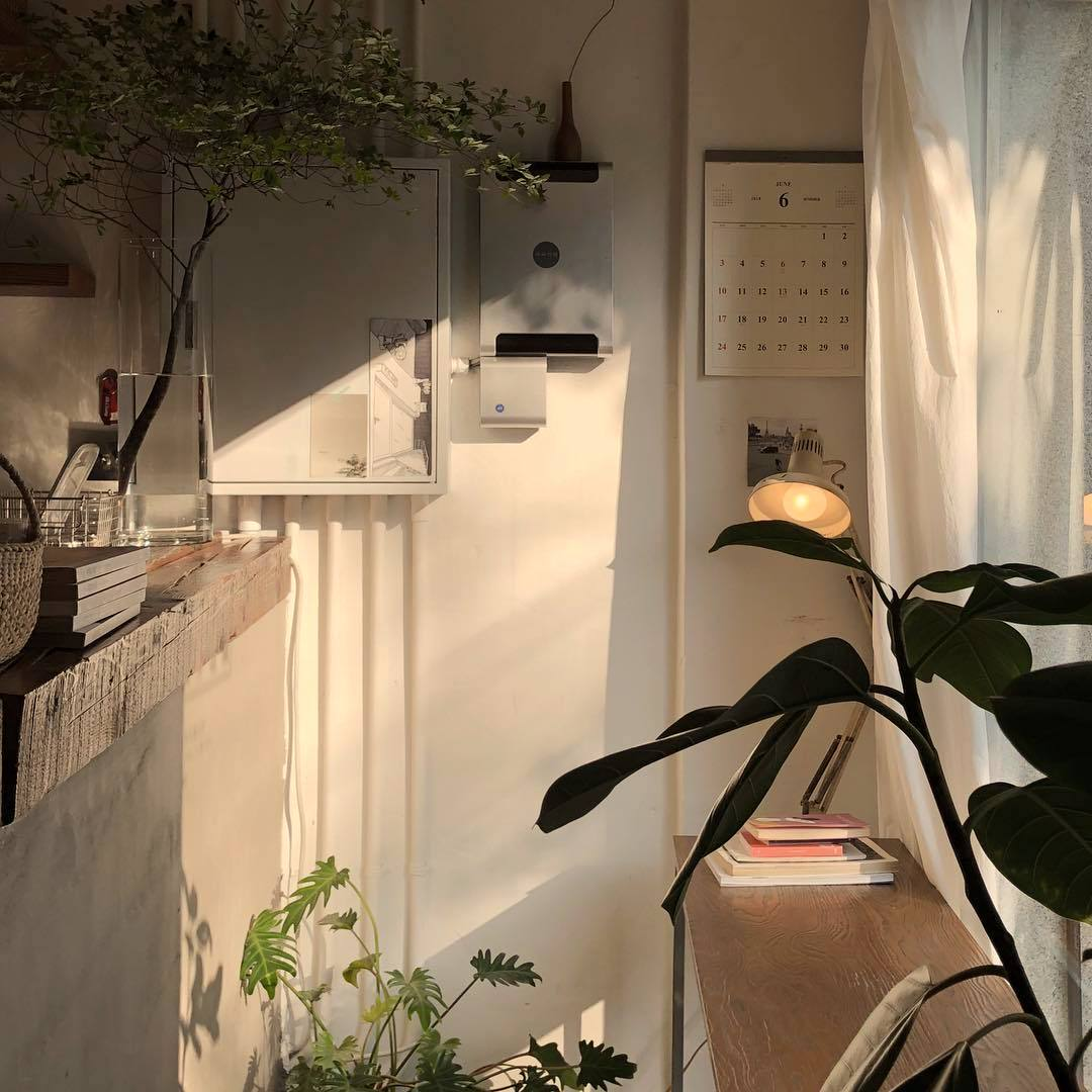 Sunlit corner of a peaceful room with white walls and wooden shelves/tables, and large house plants.